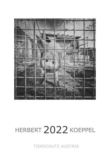 2021-500px-web--herbertkoeppel-prints-workshops-galleryDeckblatt  Tierschutz Austria_1.jpg